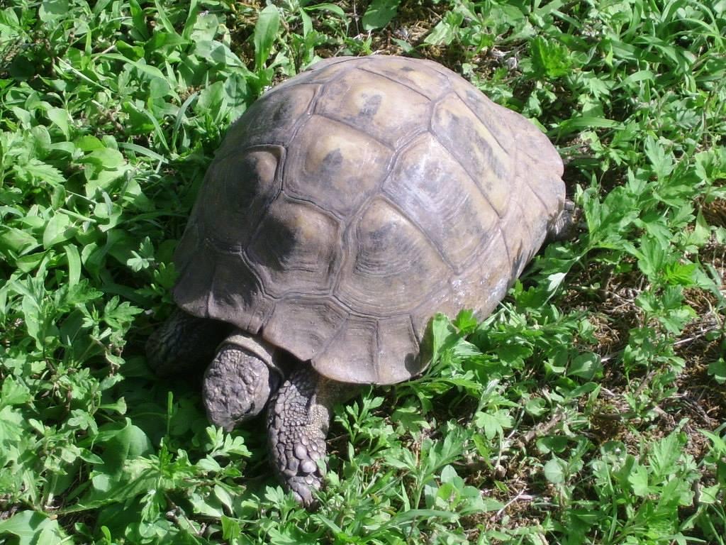 Tartaruga in letargo o morta awesome eu davvero for Temperatura tartarughe