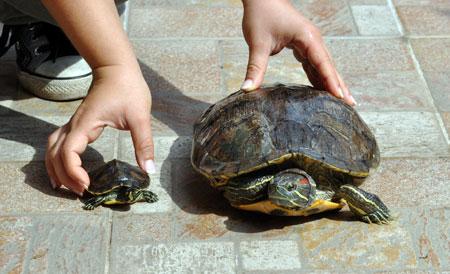 A r f associazione recupero fauna testuggini for Lago per tartarughe